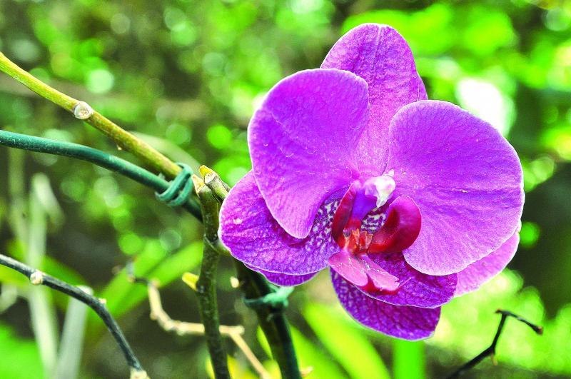 João Paulo Barbosa:Simpósio contribui com o mercado de orquídeas, que movimenta R$ 6 bilhões por ano no Brasil
