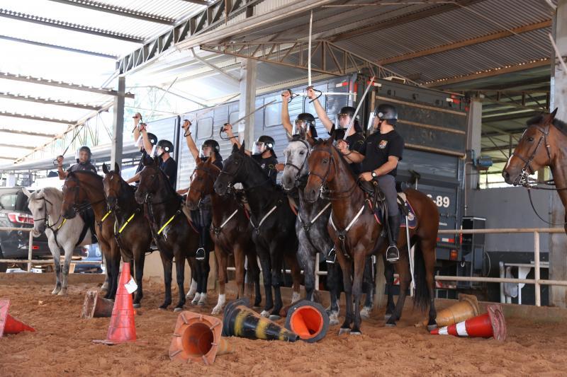Isadora Crivelli - Cavalaria conta com 15 policiais que passaram pelo curso de formação de tropa montada