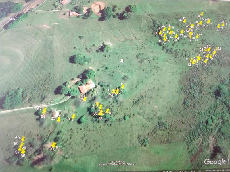 Polícia Militar Ambiental - Polícia constatou supressão de 67 árvores