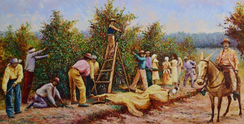 À direita, José Soares Marcondes, um dos fundadores da cidade, acompanhando a colheita de café na sua fazenda