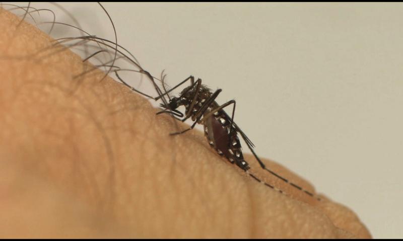 Divulgação/Fiocruz - Em Prudente há 2 mortes confirmadas por dengue neste ano