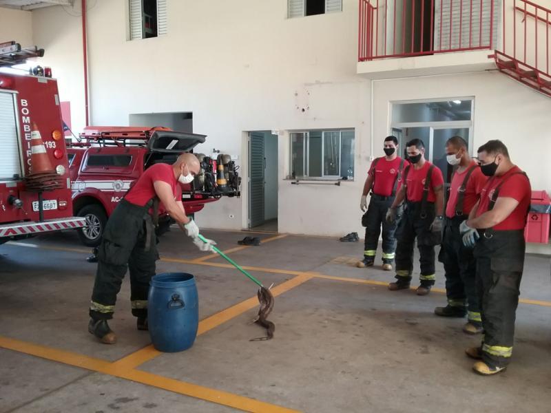 Corpo de Bombeiros - Animal foi levado para a sede da corporação, no Jardim Colina