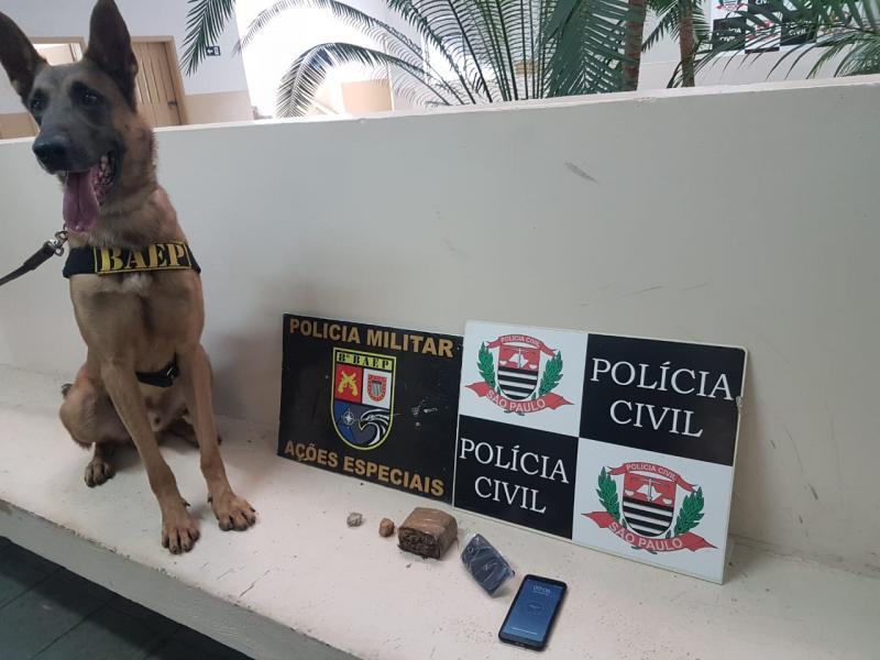 Polícia Civil - Cão de faro Thor encontrou a droga durante varredura em área de mata
