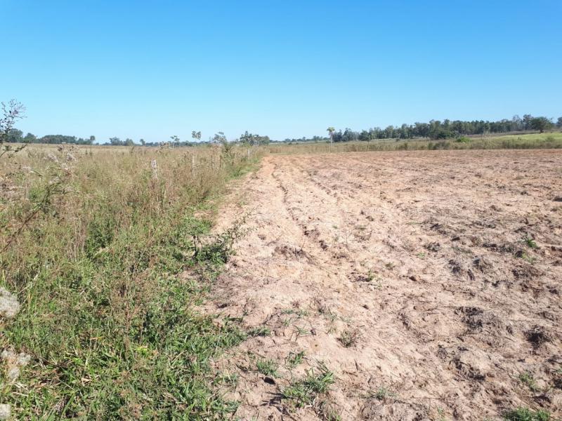Polícia Militar Ambiental - Áreas foram danificadas com uso de maquinário agrícola