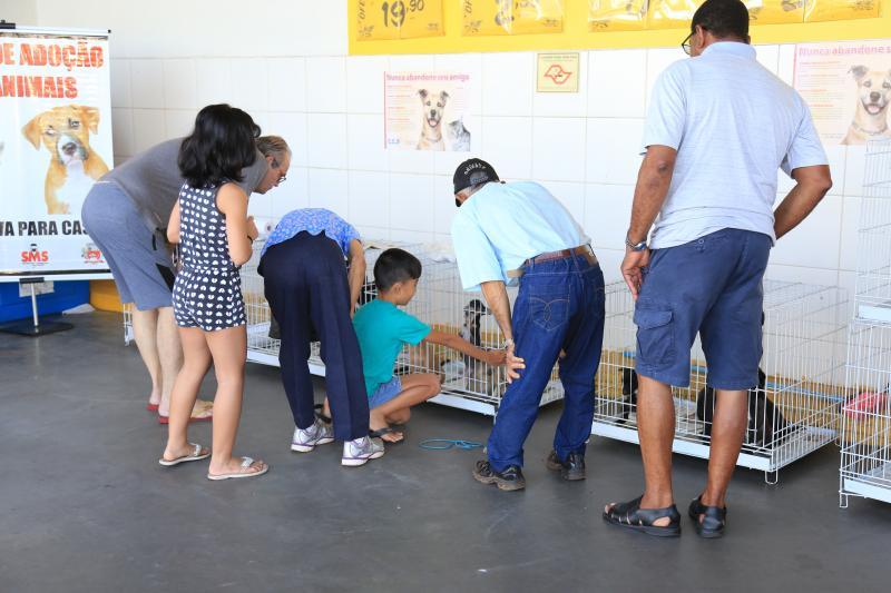 Arquivo - Animais disponibilizados à adoção pelo CCZ têm castração garantida