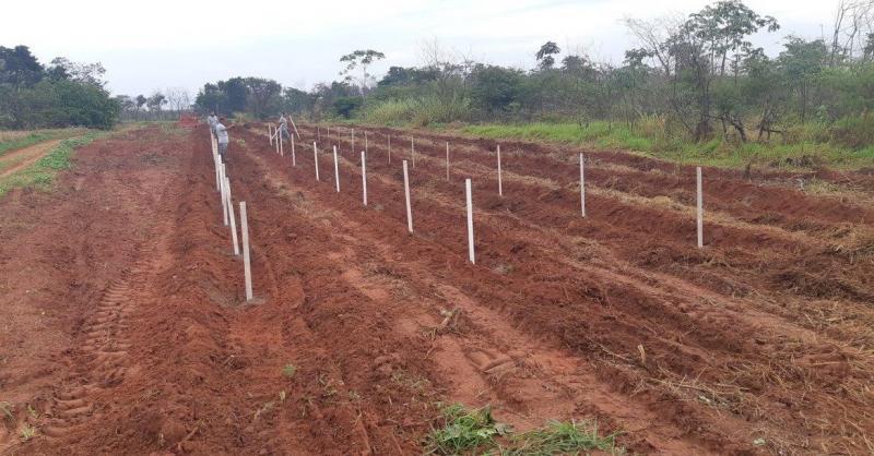 Foto: Djalma Weffort/Cedida - Ao longo dos 20 anos, projeto alcançou o plantio de 1 milhão de mudas