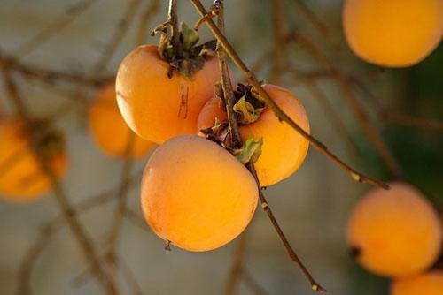 Secretaria de Agricultura e Abastecimento -  Frutas possuem diversos nutrientes que fortalecem o corpo