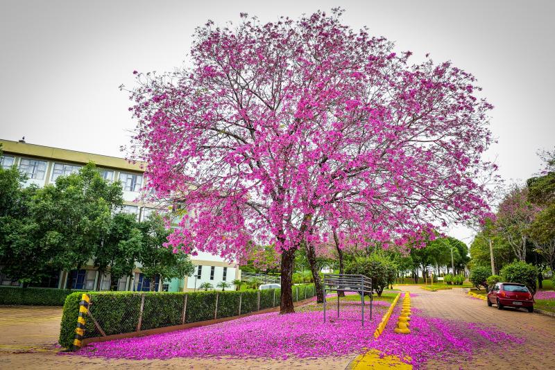 Ector Gervasoni - Espécies necessitam de baixa temperatura e maior estiagem para estimular a floração
