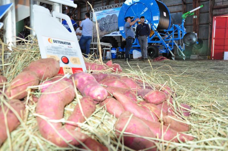 Arquivo - Prudente sedia feira tecnológica dedicada à batata-doce desde 2018