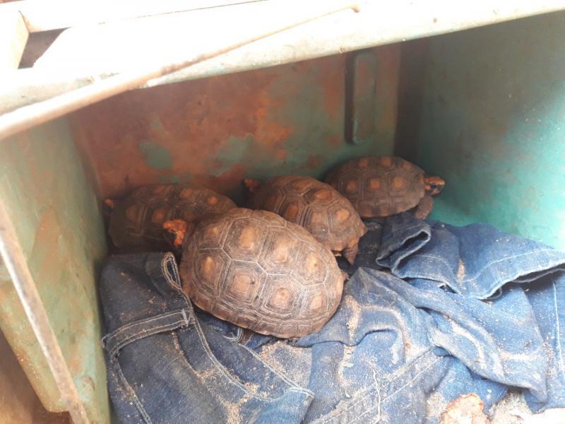 Polícia Militar Ambiental - Animais foram localizados em imóvel na Vila Palmira