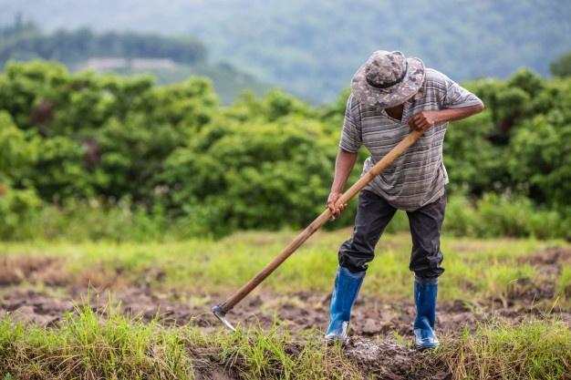 Freepik - Ideia, conforme Prefeitura, é manter o produtor local no campo
