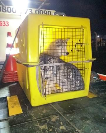 Cedida/Cart - Animais foram localizados na Rodovia Raposo Tavares