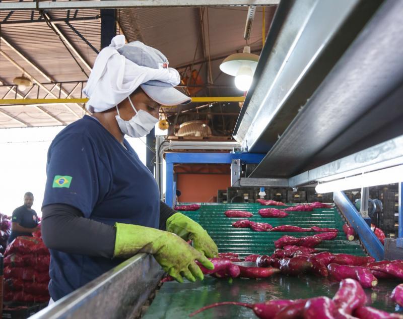 Weverson Nascimento - Empresa prudentina investe no beneficiamento completo do tubérculo