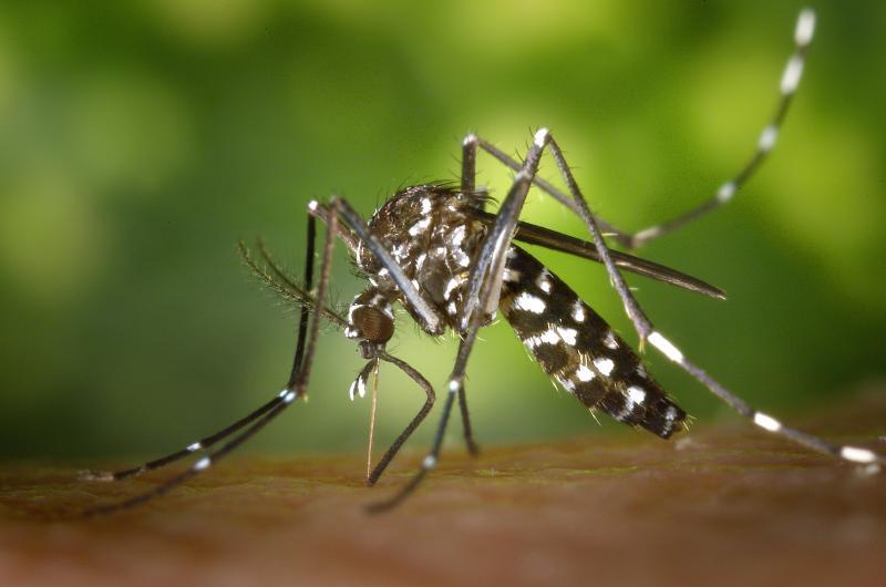 Pexels - Bairros como Planaltina, Cambuci, Itapura e José Rotta são os mais afetados pela doença causada pelo Aedes