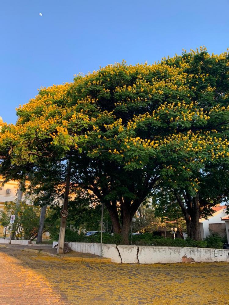Duda Martins - Além de embelezar as cidades, as árvores floridas se relacionam ecologicamente com a fauna