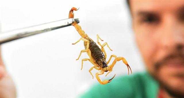 Arquivo - Objetivo do trabalho é intensificar ações de prevenção e combate às endemias e escorpiões