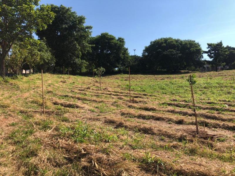 Ação foi realizada com o objetivo de aumentar a arborização da área e a diversidade de espécies
