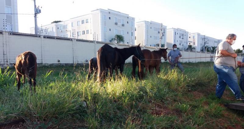Animais foram levados ao CCZ, onde ficarão por até sete dias