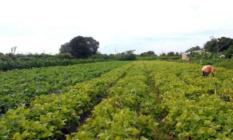 Um dos desafios dos produtores rurais é justamente o acesso ao mercado