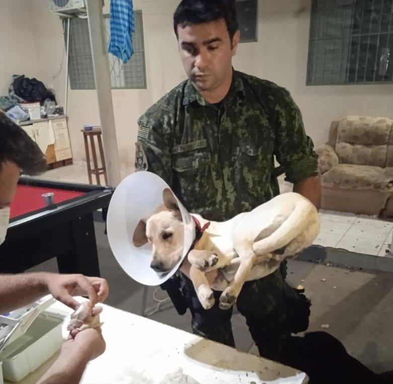 Animal foi resgatado após denúncias de maus-tratos