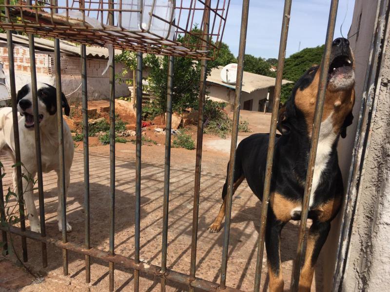 Animais estavam sendo alimentados pela vizinhança, que se comoveu com a situação