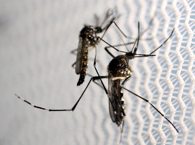 Cuidados contra Aedes devem ser seguidos mesmo em período pandêmico, alerta VEM