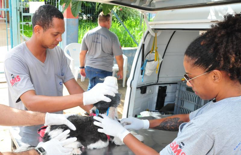 Arquivo - CCZ alerta para a importância dos testes que confirmam a doença nos animais