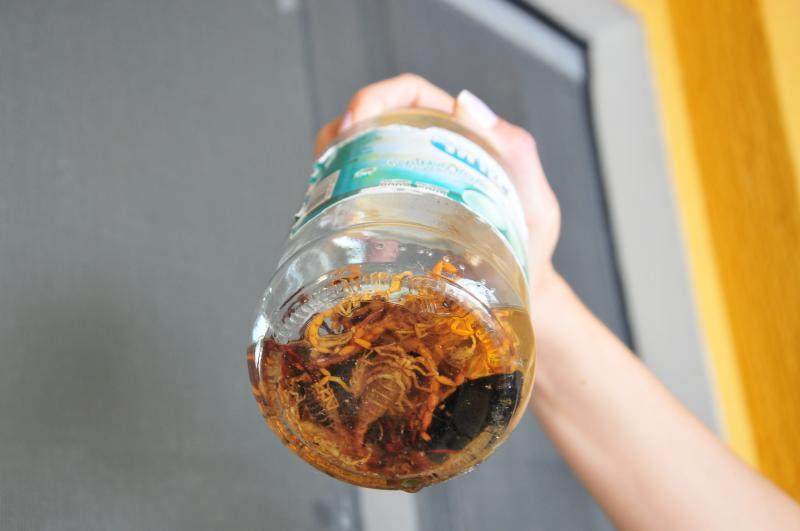Arquivo - Em trabalho de campo, 69 escorpiões foram encontrados