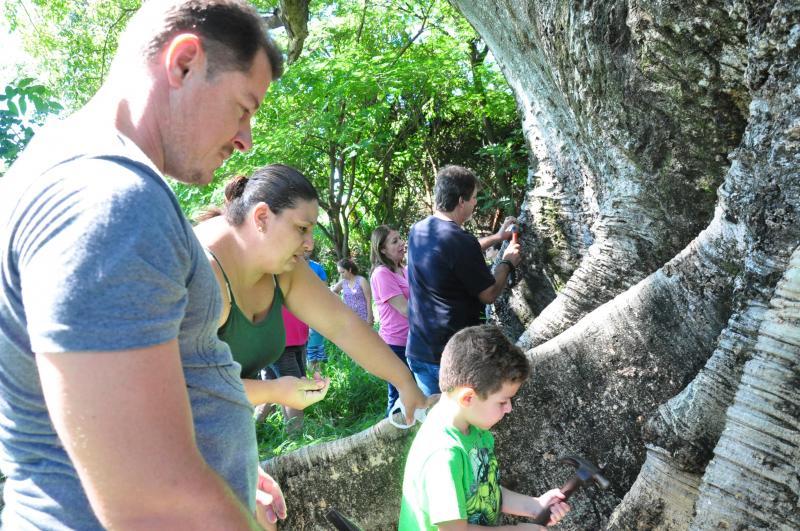 José Reis - Devotos se reuniram entorno da tradicional figueira para martelar pregos no seu tronco