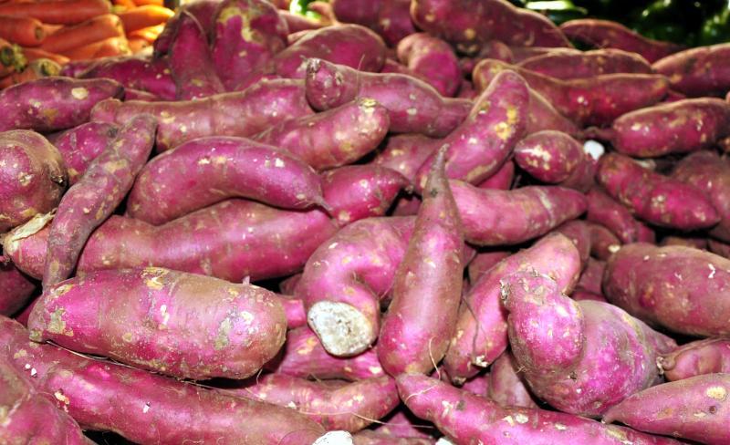 Arquivo - Entre 70 e 80 produtores dividem a produção de batata-doce no EDR de PP