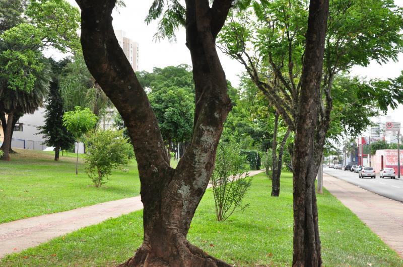 José Reis - 85 espécies são distribuídas entre as arbóreas e arbustivas, conforme a Prefeitura