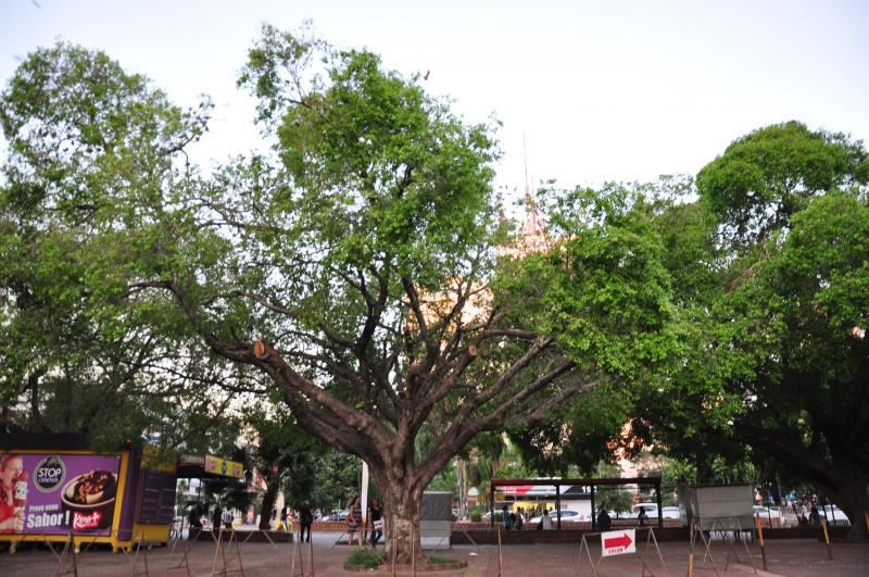 José Reis -Proposta é a erradicação de 12 árvores existentes na praça que servem de poleiro às aves