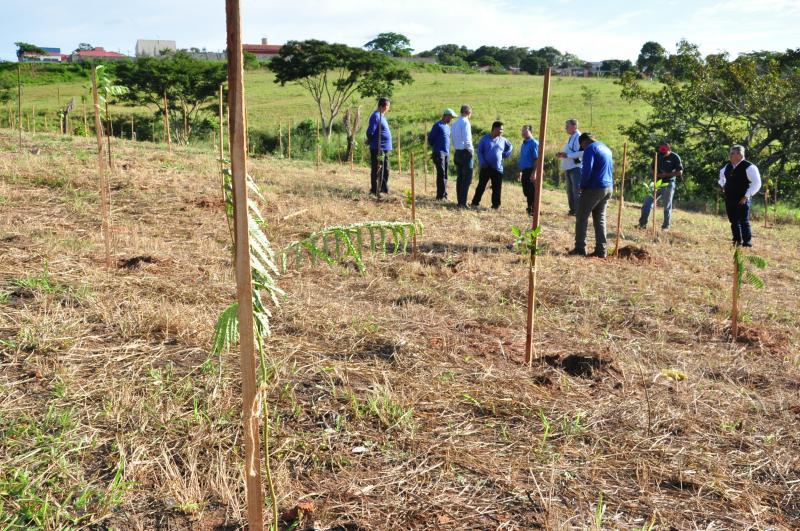 José Reis - Plantio ocorreu em dois dias e somou 578 árvores plantadas pela pasta no Cambuci