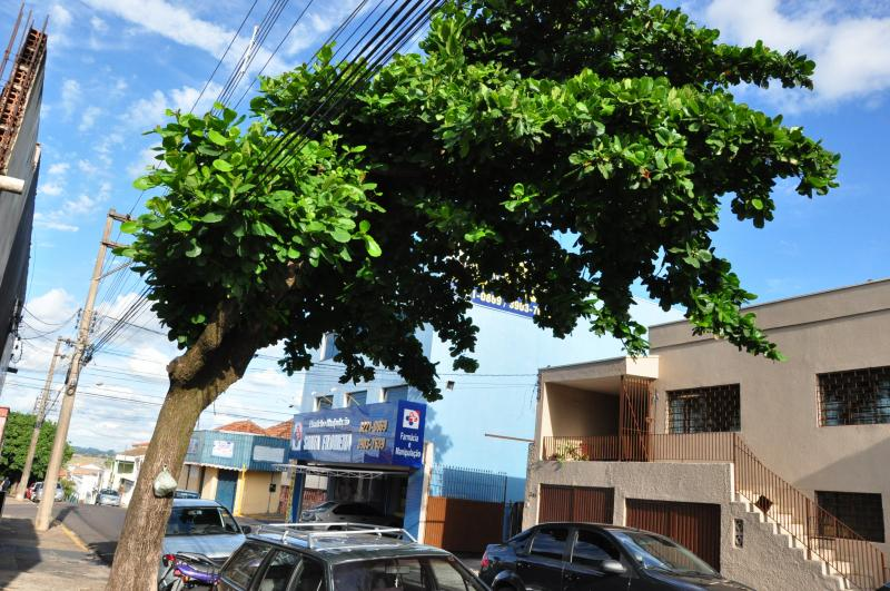 José Reis -Árvore foi alvo de cortes na área da fiação elétrica
