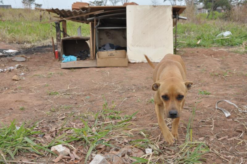 Arquivo - Animais abandonados são castrados e colocados para adoção