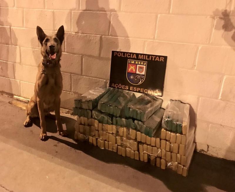 Polícia Militar - Cão de faro Thor localizou os entorpecentes em três caixas de papelão no bagageiro