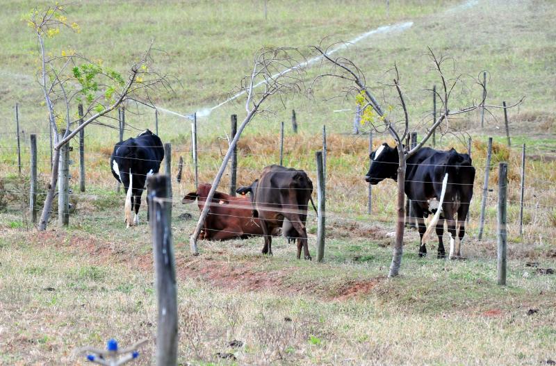 Arquivo - Região teve 97,31% das fêmeas de bovinos e bubalinos vacinadas