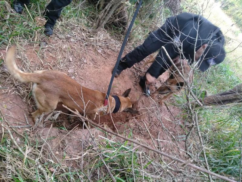 Polícia Civil/Cedida:Cães farejadores do policiamento auxiliaram na operação