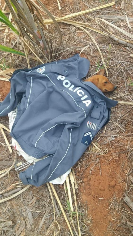 Polícia Militar - Cadela Vitória foi salva pelos policiais após serem acionados para atendimento