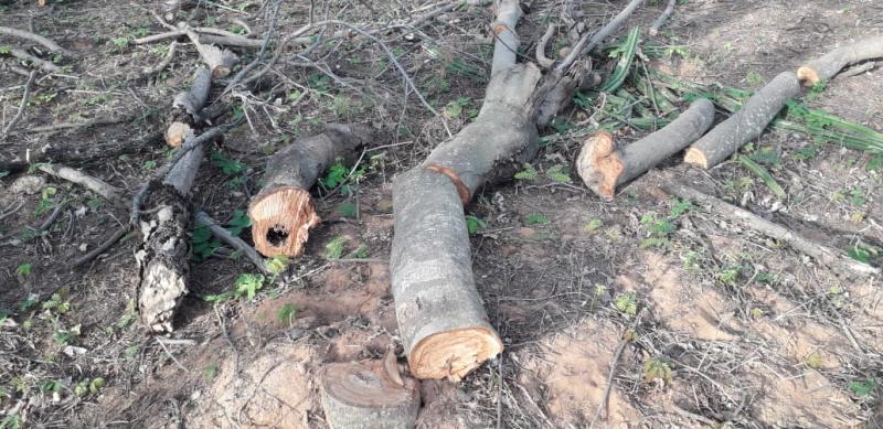 Polícia Militar Ambiental  - Além do corte irregular de árvores, autuações flagraram fogo em espaços de vegetação nativa