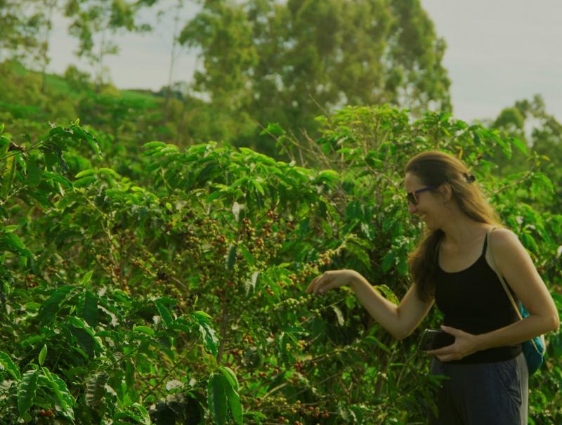 Visita às fazendas de Café faz parte do programa de turismo rural em Brotas