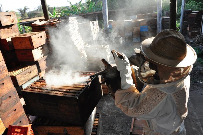 José Reis - No sítio da família Valera, em Prudente, a produção gira em torno de três floradas/ano de mel