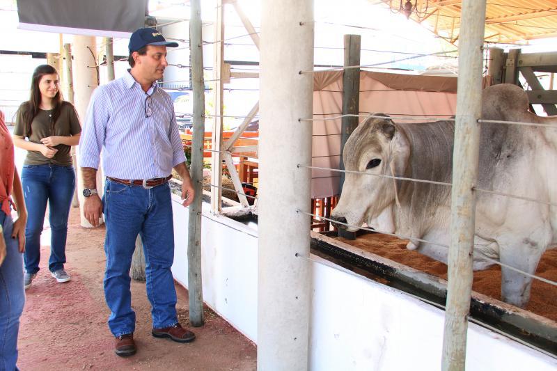 Divulgação:Segundo Álvaro Lima, melhoramento genético é constante através do uso de sêmen de touros comprovados