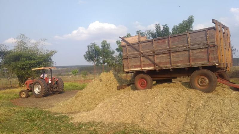 Fundação Itesp - Com restante da colheita, produtores fazem a silagem para alimentar o gado