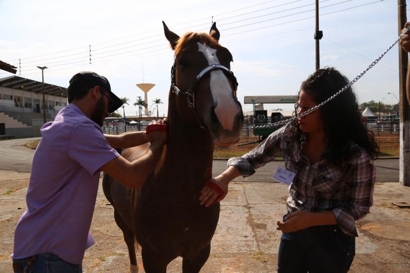 Marco Vinicius Ropelli - Maioria dos cavalos que participa das competições é da raça quarto de milha