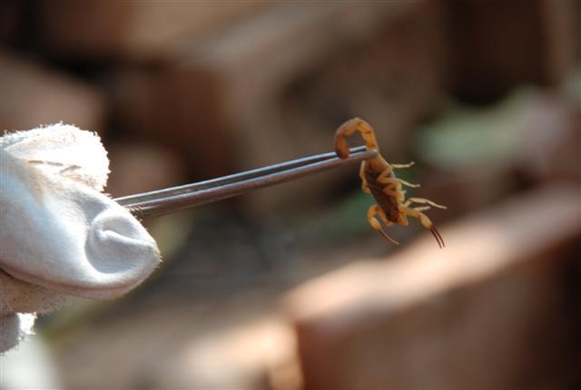 Jean Ramalho - Bueiros sujos são, segundo Elaine, os maiores criadouros dos escorpiões e outro bichos peçonhentos