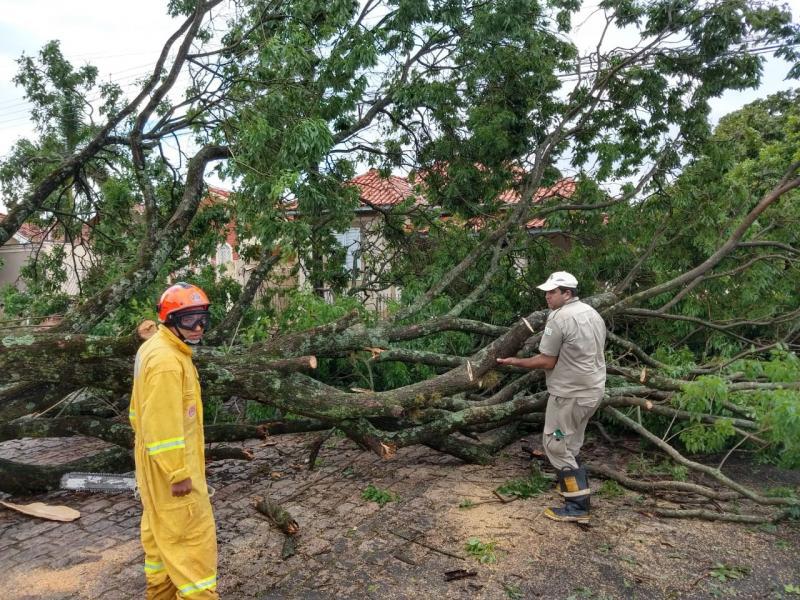 Cedida - Em Santo Anastácio, as fortes chuvas derrubaram árvores no perímetro urbano