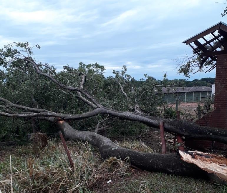 Energisa Sul-Sudeste/Cedida – Em Salmourão teve que de árvores, mas a energia já foi restabelecida