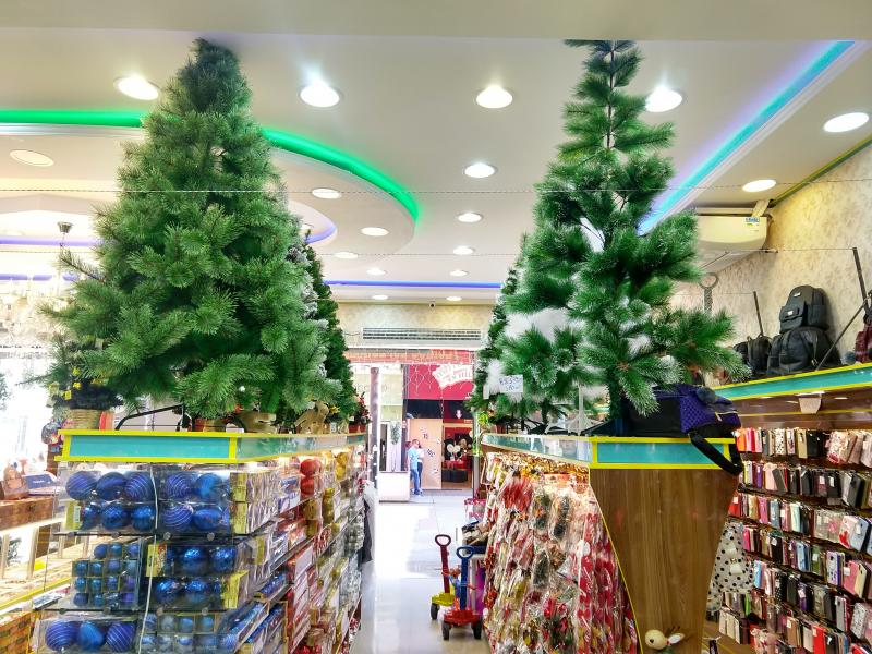 Pedro Silva - Pinheiros verdes ainda são os favoritos da clientela, que prefere decorá-los em casa