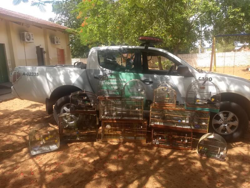 Polícia Militar Ambiental - Pássaros estavam presos em gaiolas sem autorização do órgão competente
